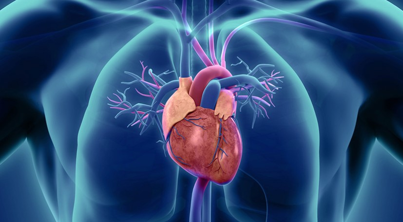Drugs to Treat Heart Disease